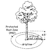 Diagram of the protected root zone